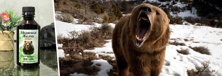 Чем полезна медвежья желчь и что лечит