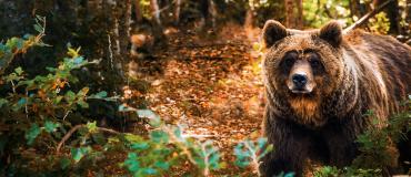 Желчь медведя при онкологии